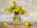 Горицвет – как да го отглеждаме