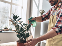 5 неща, които да правите за растенията си, освен да ги поливате