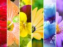 Цветница е! Празникът на цветята