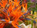 Стрелиция - едно интересно растение