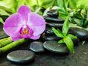 6 цъфтящи растения с положителна енергия според фъншуй