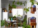 Здравословни ползи от стайните растения