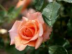 Честит имен ден на Валентина, Валя, Харалампи