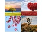 Изберете си дърво и вижте коя черта на характера доминира при вас