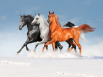 Знаете ли, че... конете не могат да повръщат?