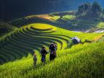Оризищата като впечатляващ туристически пейзаж (галерия)