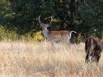 """Екипът на """"Новините ON AIR"""" спаси елен лопатар от отстрел"""