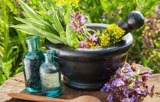 6 мощни билки срещу мигрена