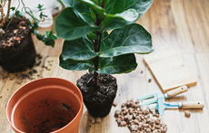 Как да пресаждате растенията си, без да ги убиете