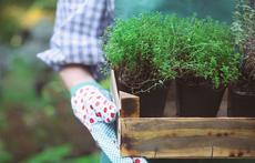 Натурални методи за наторяване на растенията в дома и градината