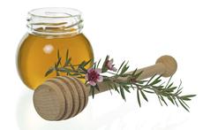 Лечебните свойства на маслото от чаено дърво