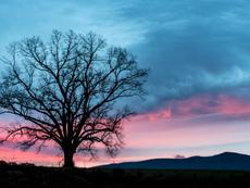 Притча за дървото на желанията