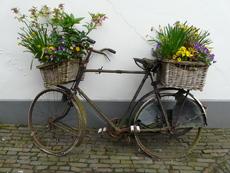 Кои цветя са най-добрите чистачи на въздуха?