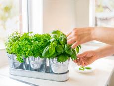 Плодове и зеленчуци, които може да отглеждате вкъщи