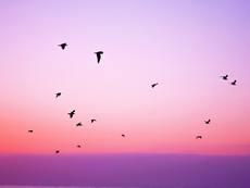 Мисъл на деня... за вътрешния мир