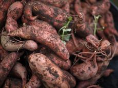 Защо са полезни сладките картофи?
