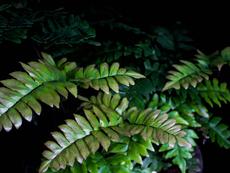 Растения за дома, виреещи и на тъмно