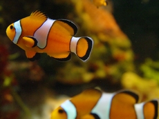 Интригуващи идеи за домашния аквариум