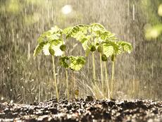 Каква е причината дъждът да ухае така приятно?
