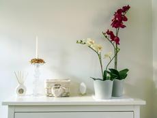 Фъншуй растения за любов, късмет, успех, пари