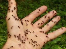Как да предотвратим ухапванията от насекоми?