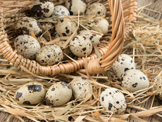 Ползите от пъдпъдъчите яйца