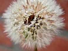 Какво още предизвиква алергични реакции през пролетта?