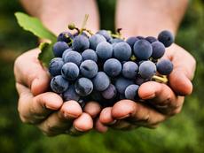 Масло от гроздови семки за фантастична кожа