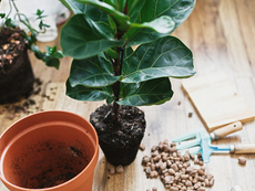 Как да пресаждате растенията си без да ги убиете