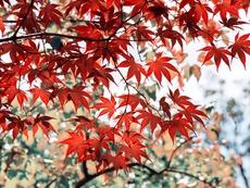 Къде рисува есента