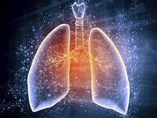 Любопитни факти за белия дроб
