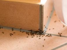 10 начина да изгоните мравките от дома си