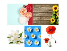 Изберете си цвете и вижте каква жена сте