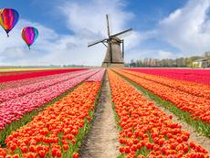 Знаете ли, че... холандците се борят за бъбрек в риалити шоу?