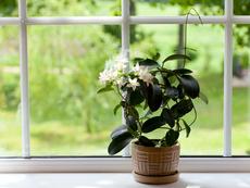 5 растения за положителна енергия в дома