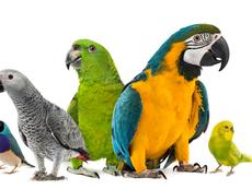 Знаете ли, че... някои птици могат да спят във въздуха?