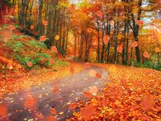 Есента идва с постепенно захлаждане