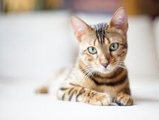 8 храни, които котката ви не трябва да консумира