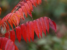 Какво да направим с есенните листа?