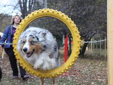 Специална площадка за кучета откриха в София