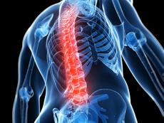Любопитни факти за гръбначния стълб