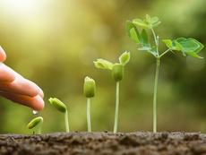 Растения, които трябва да се засаждат в близост