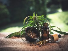 Как да засилите имунитета си с помощта на конопено масло