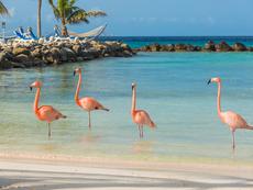 Остров Аруба – рай с бели пясъци и фламинги