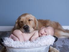 Как да представим бебето на домашния любимец без стрес?