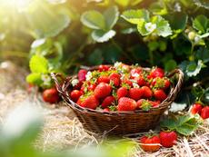 Как да съхраняваме ягодите, така че да не се развалят