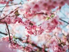 Мисъл на деня за... красотата на пролетта