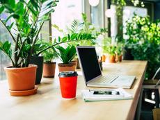 Защо е добре да имаме растения на работното място