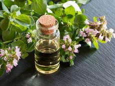 Антистареещи ползи от етеричното масло от риган