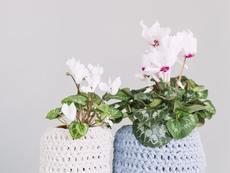 3 съставки, които ще съживят цветята